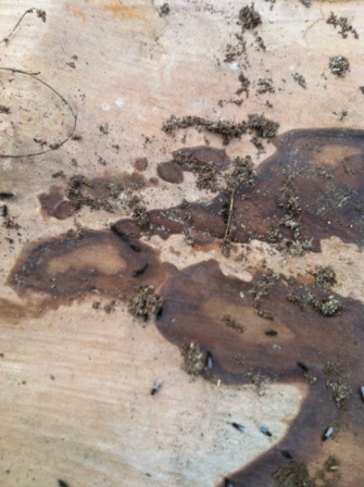 Trees what you are looking at are termites and ants